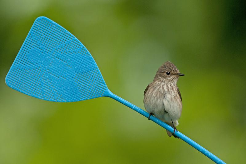 bijzondere lezing vogelfotografie  7