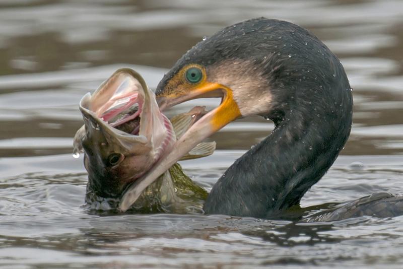 bijzondere lezing vogelfotografie  8