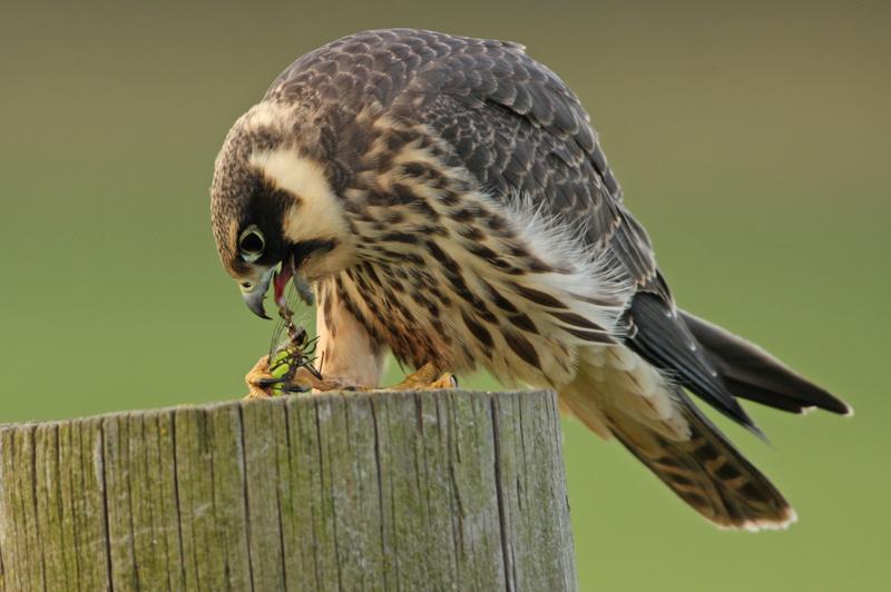 bijzondere lezing vogelfotografie  9
