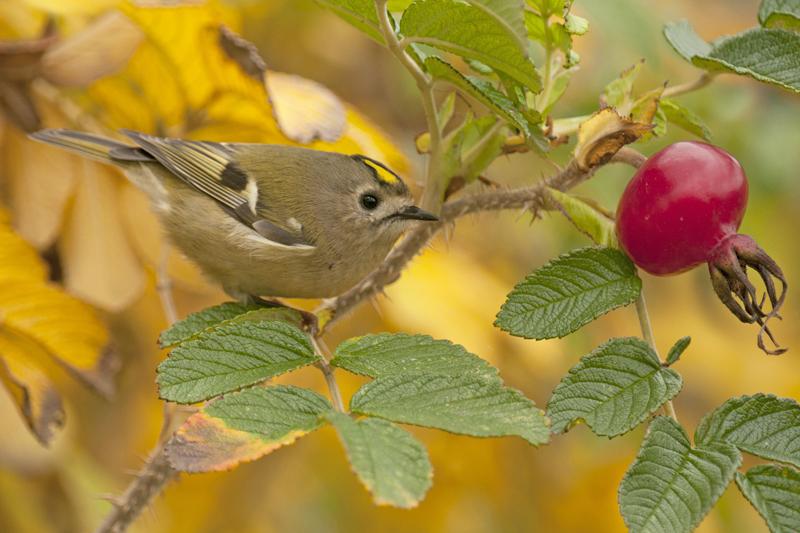 aaaabijzondere-lezing-vogelfotografie-5