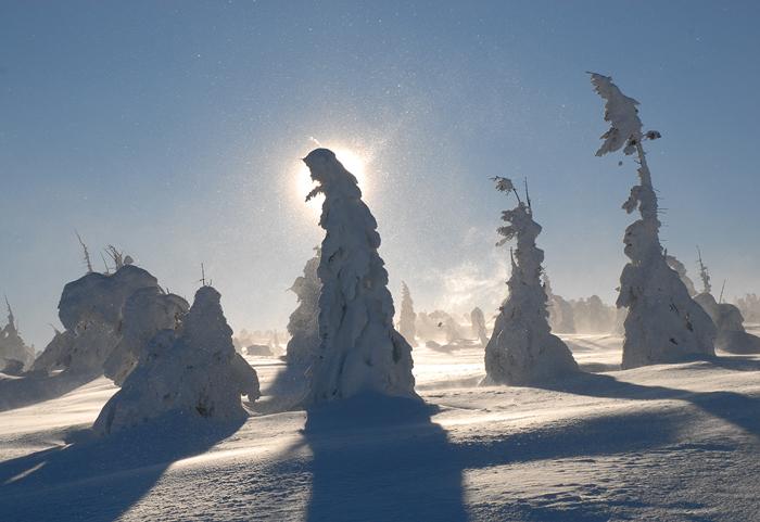 bomen-in--de-sneeuwstorm2