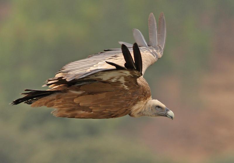lezing vogelfotografie natuur spanje 10