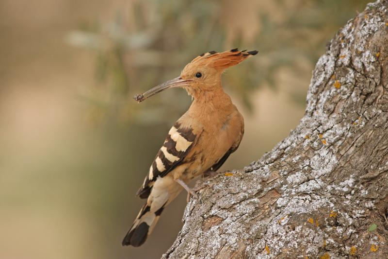 lezing vogelfotografie natuur spanje 2