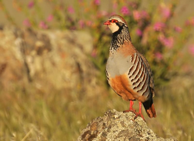 lezing vogelfotografie natuur spanje 4
