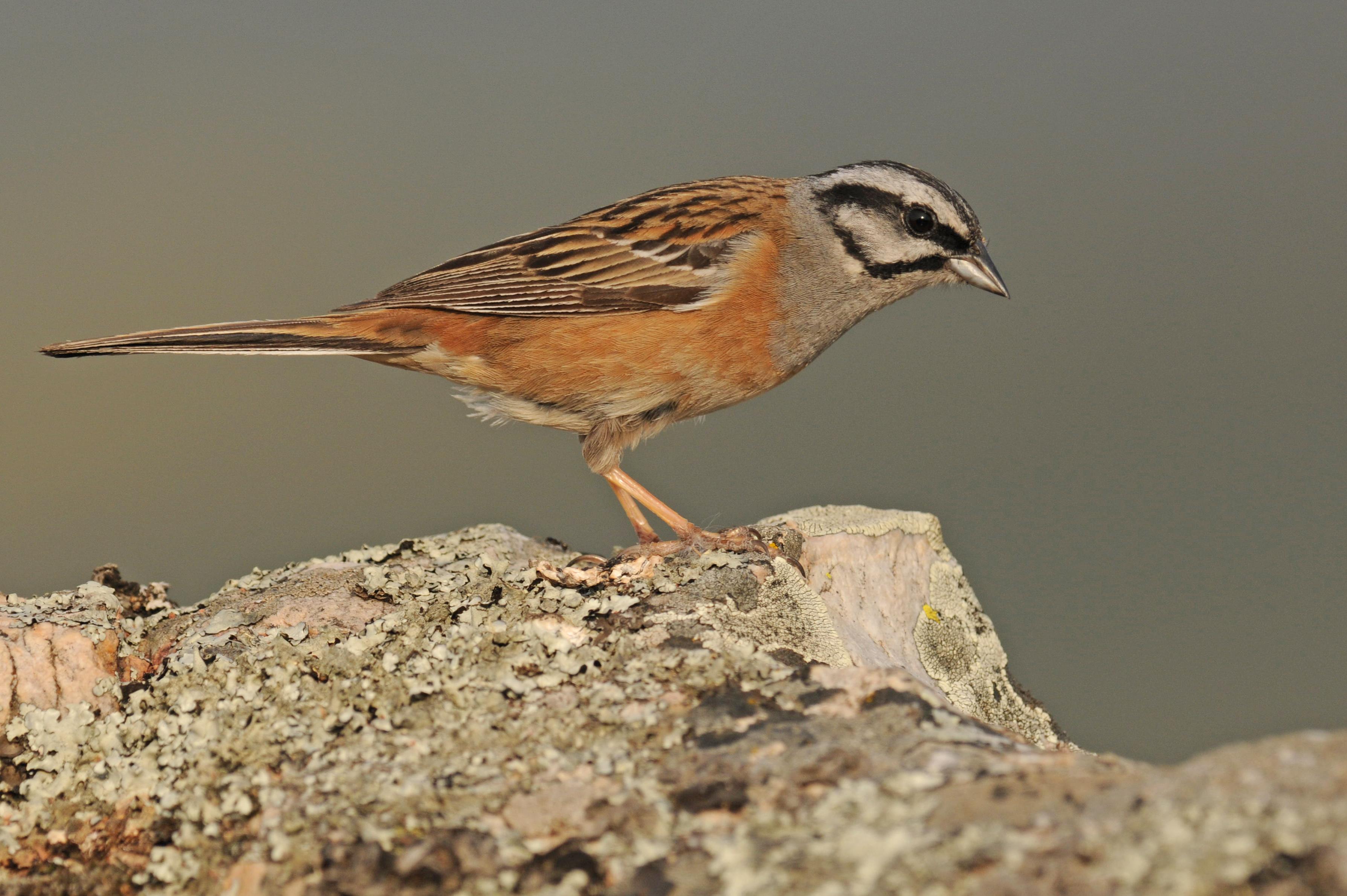 lezing vogelfotografie natuur spanje 8