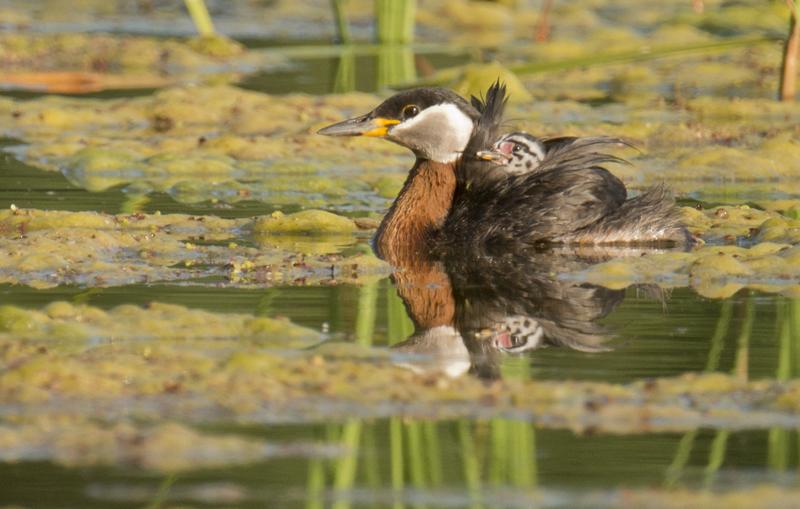 lezing vogelfotografie polen 3